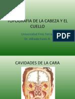 Topografia de La Cabeza y El Cuello Def Uft08