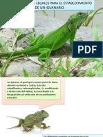 Requerimientos Legales Para El Establecimiento de Un Iguanario