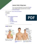 Gallery of Human Body Diagrams
