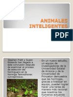 ANIMALES INTELIGENTES