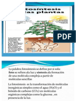 fotosintesis ecologia