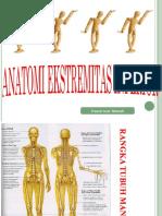 Anatomi Ekstremitas Inferior