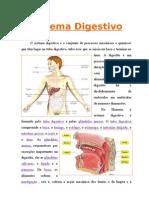 sistema-digestivo1