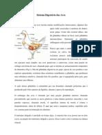 Trabalho de Anatomia