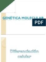 Biologia Electivo Jorge Martines Joaquin Mascaro