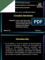 Sistema Nervioso_Fisiologia
