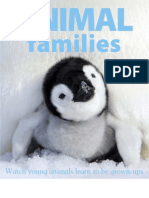 10504 Animal Families