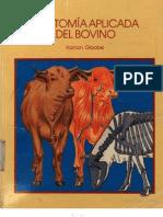 Anatomía Aplicada del Bovino