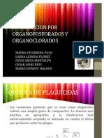 Intoxicacion Por Organofosforados y Organoclorados