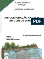 Autodepuracao-2008