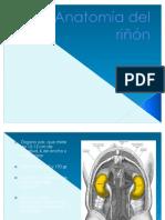 anatomía de riñón y filtración glomerular