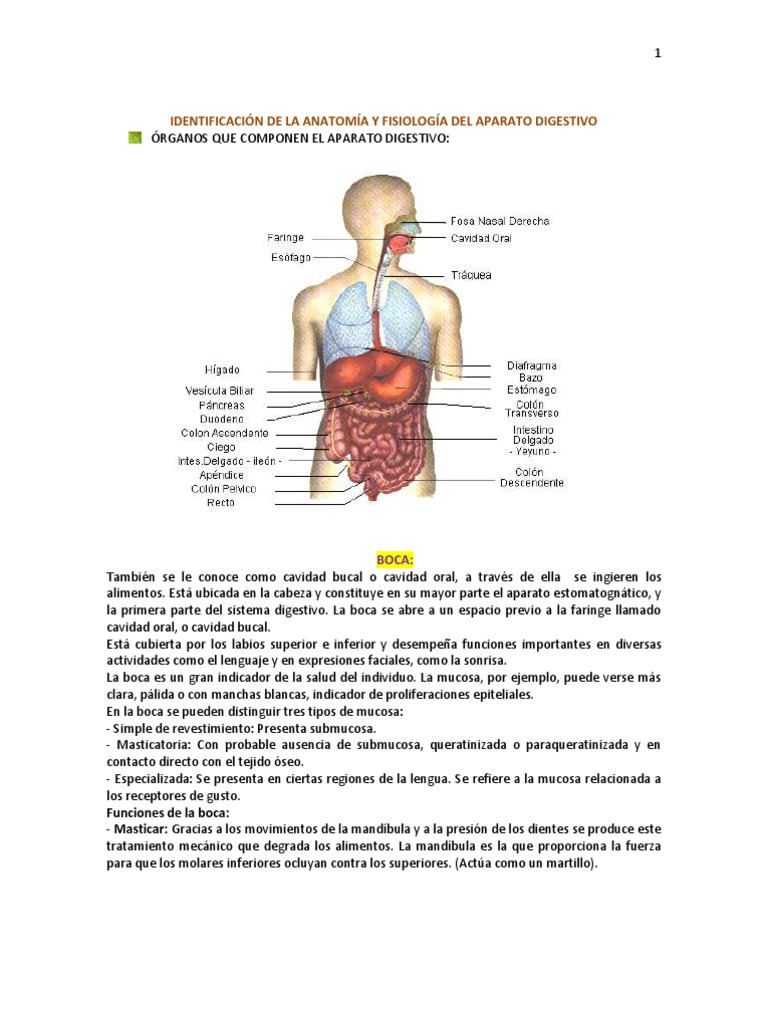 IDENTIFICACIÓN DE LA ANATOMÍA Y FISIOLOGÍA DEL APARATO DIGESTIVO