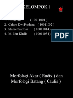 Morfologi Akar ( Radix ) Dan Morfologi Batang ( Caulis )