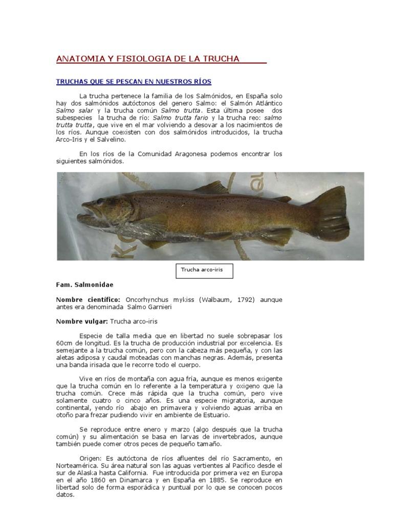 Anatomia de La Trucha