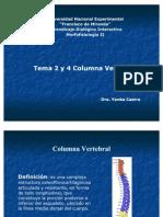 Tema 2 Columna Vertebral