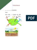 fotosintesi reacció