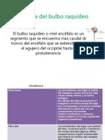 Anatoma Del Bulbo Raqudeo (2)