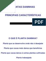 Planta Daninha_ Principais Caracteristicas