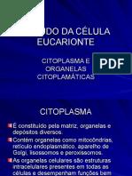 ESTUDO DA CÉLULA EUCARIONTE
