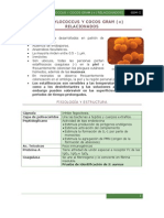 Staphylococcus y Cocos Gram + dos