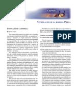 Ultrasonografía de la Rodilla