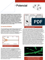 Neuronas y Potencial de Accion
