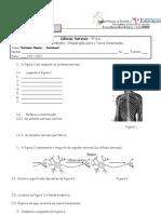 Ficha de preparação para o teste intermédio