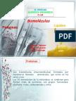 Usmp_c-14_prot_lipidos_2011-1