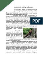 Plante Si Animale Ocrotite Prin Lege in Romania