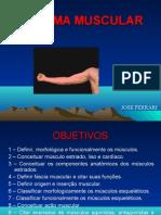04. Sistema Muscular