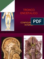 formacion reticular_1