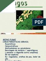 Fungos cesinha