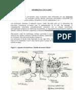 biologia celular membranaglucocaliz