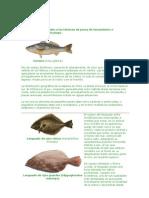 Ac_fish_02_especies Pesca en El Mar