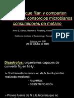 consorcio archaea
