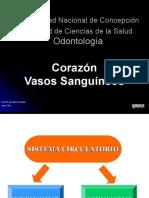 Cardiovascular - Corazon y Vasos Sanguineos