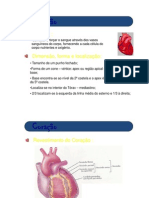 anatomia_j_coracao