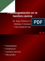 Pseudogestación en la hembra canina