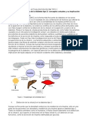 activadores alostéricos del papel potencial de la glucoquinasa en la terapia de la diabetes