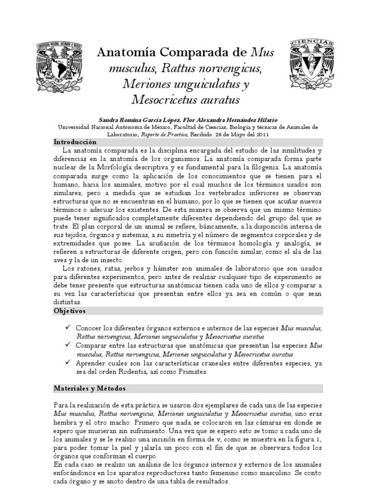 Practica ANATOMIA COMPARADA