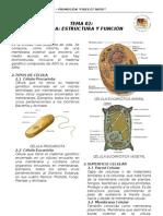 BIO 02 - Célula Estructura y Función