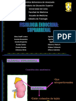 Medicina - Fisiologia Glandula Suprarrenal
