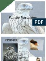 Familia falconidae-