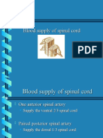 Blood Supply of Spinal Cord