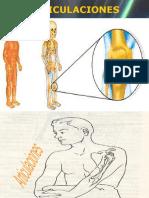 Anatomia Primera Clase Parte 3