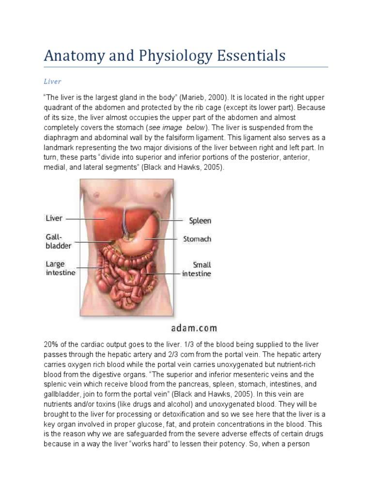Schistosomiasis (from anatomy to pathophysiology) | Liver | Vein