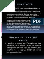 Columna Cervical, Toracica..
