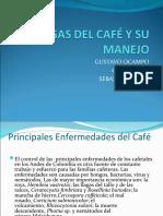 ...PLAGAS DEL CAFÉ Y SU MANEJO