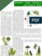 Biologia A - Pteridófitas, Gimnospermas e Angiospermas