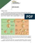 Minicurso controle e descontrole da  Divisão e diferenciação celular